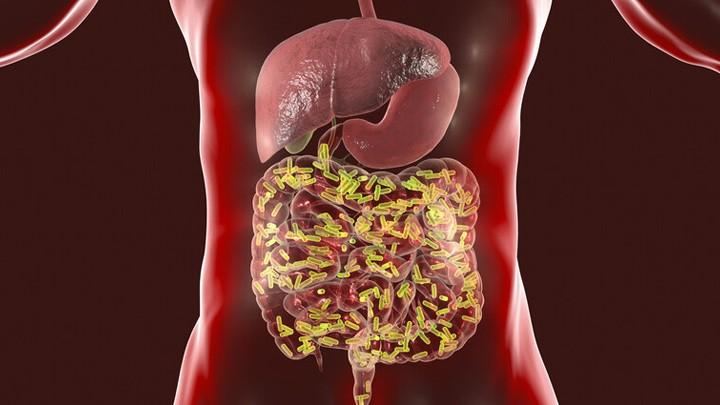 دراسة: بكتيريا الأمعاء تلعب دورًا في محاربة كورونا