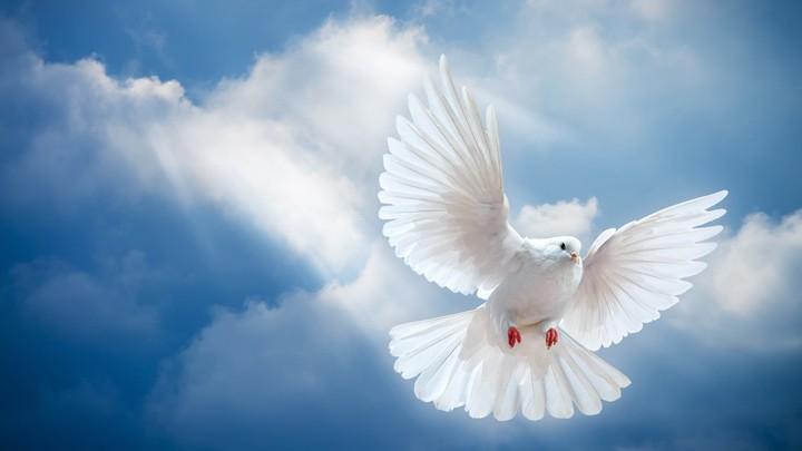 سلامٌ على دنيا السّلام...