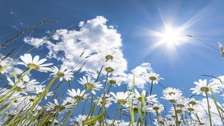 إستغل ضوء الشمس كما يجب وسيكون عقلك ممتنا للغاية!